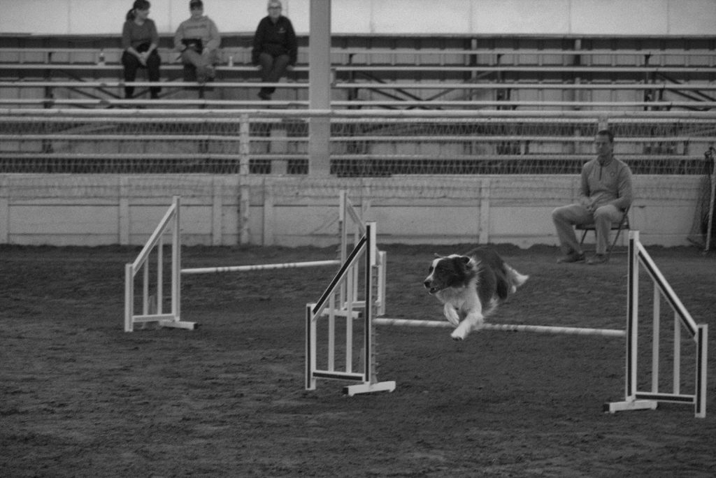 American Kennel Club Agility Trials