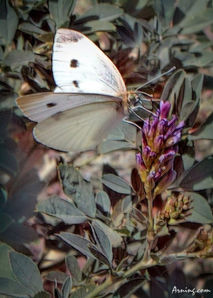 Saw some butterflies hard at work this morning.