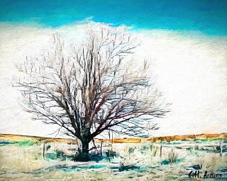 Oklahoma tree