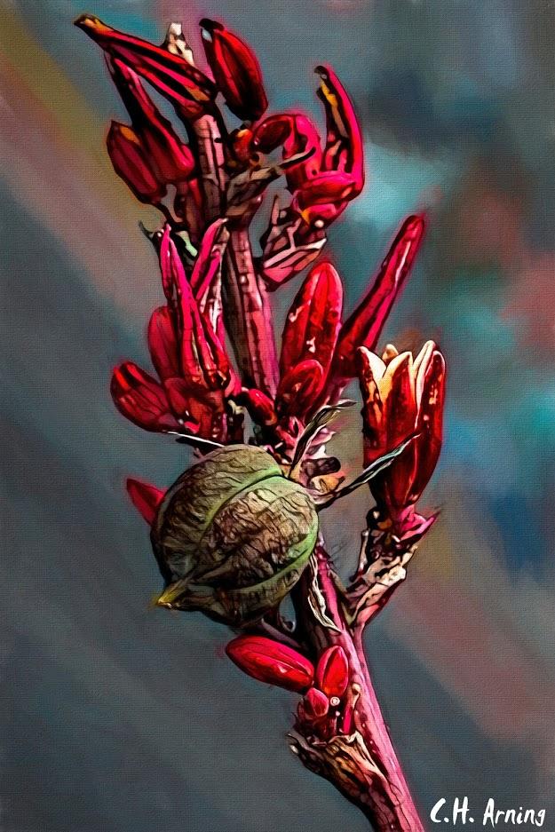 Red Hesperaloe