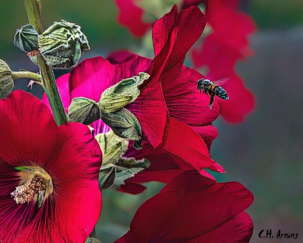 Gathering pollen
