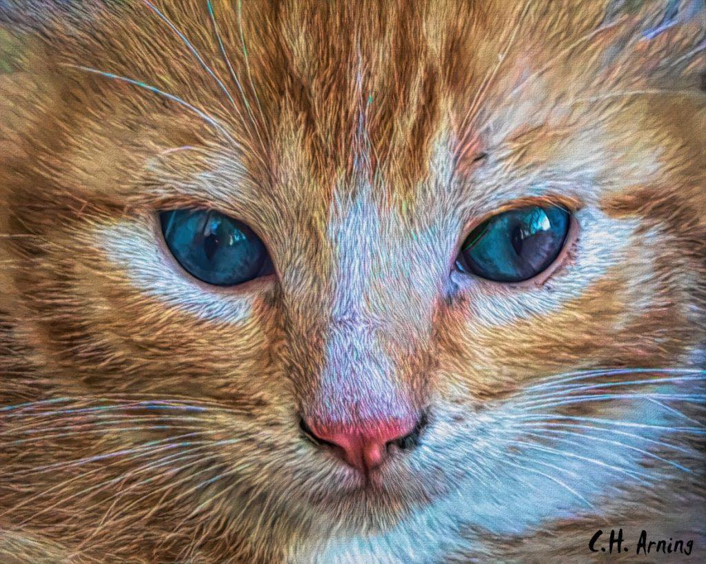 Kitten's Stare