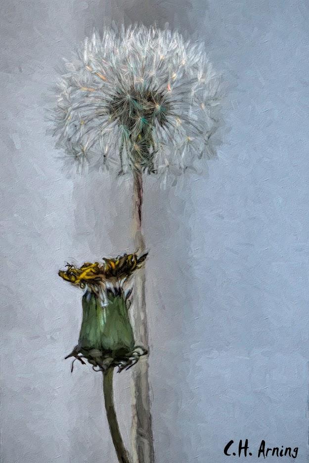 The Dandelion's Gift