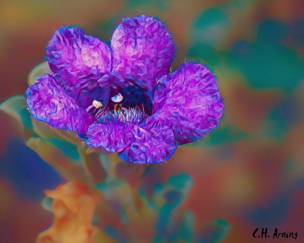 small blue blossom