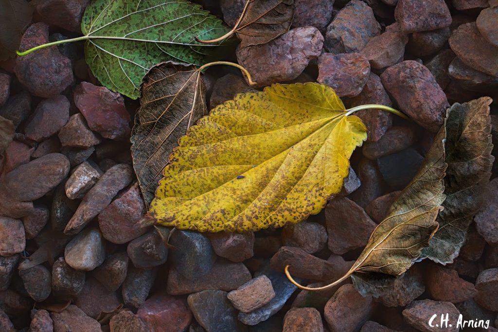 Courtyard Leaves