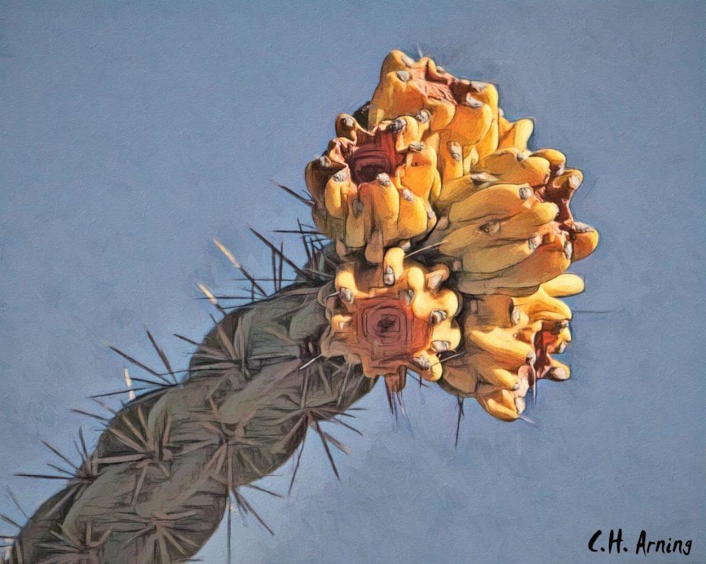 Museum cactus