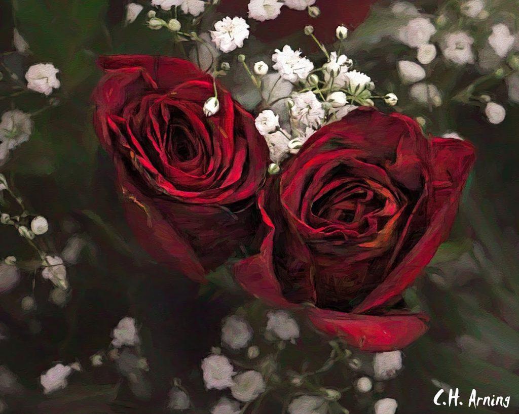 Pre-Valentine's Day Roses