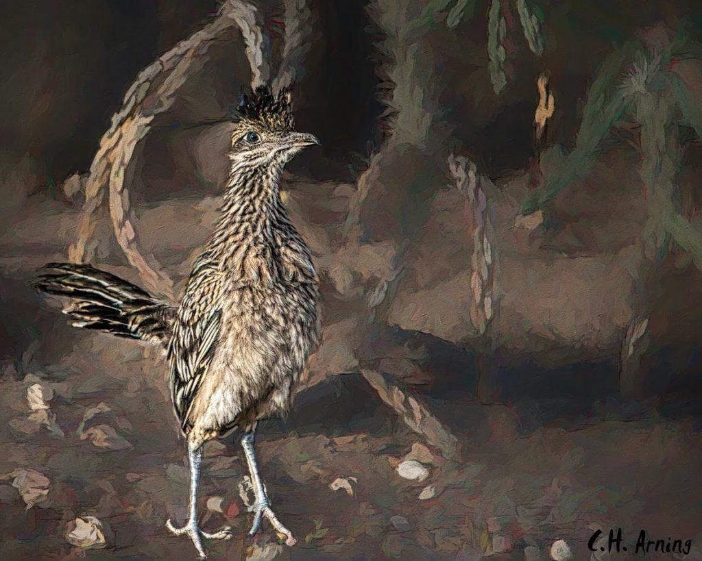 Chaparral Bird