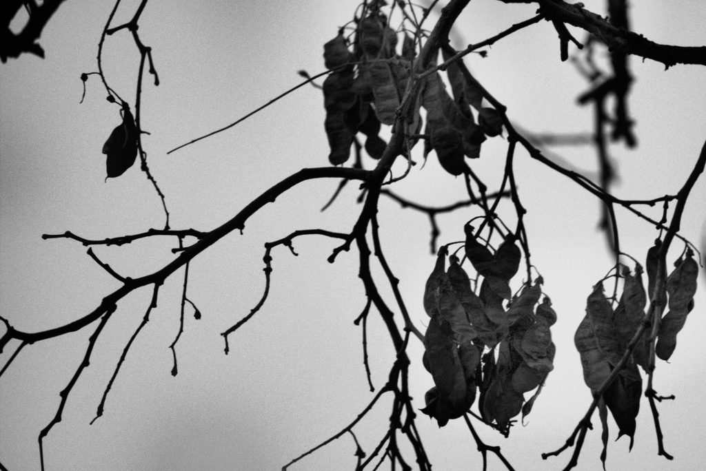 leaves hanging in a tree