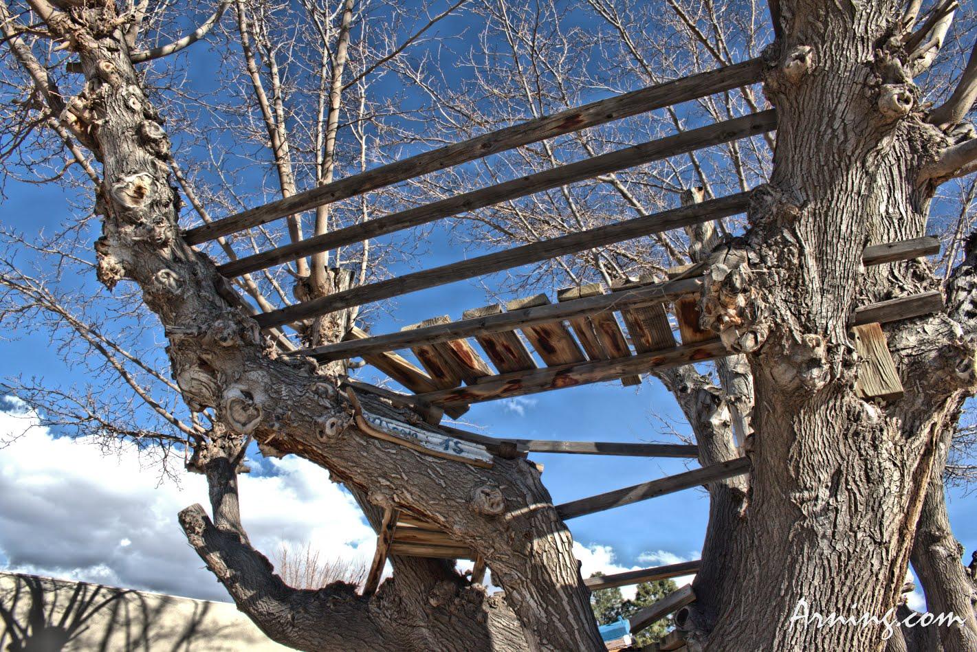 Neighborhood Tree House