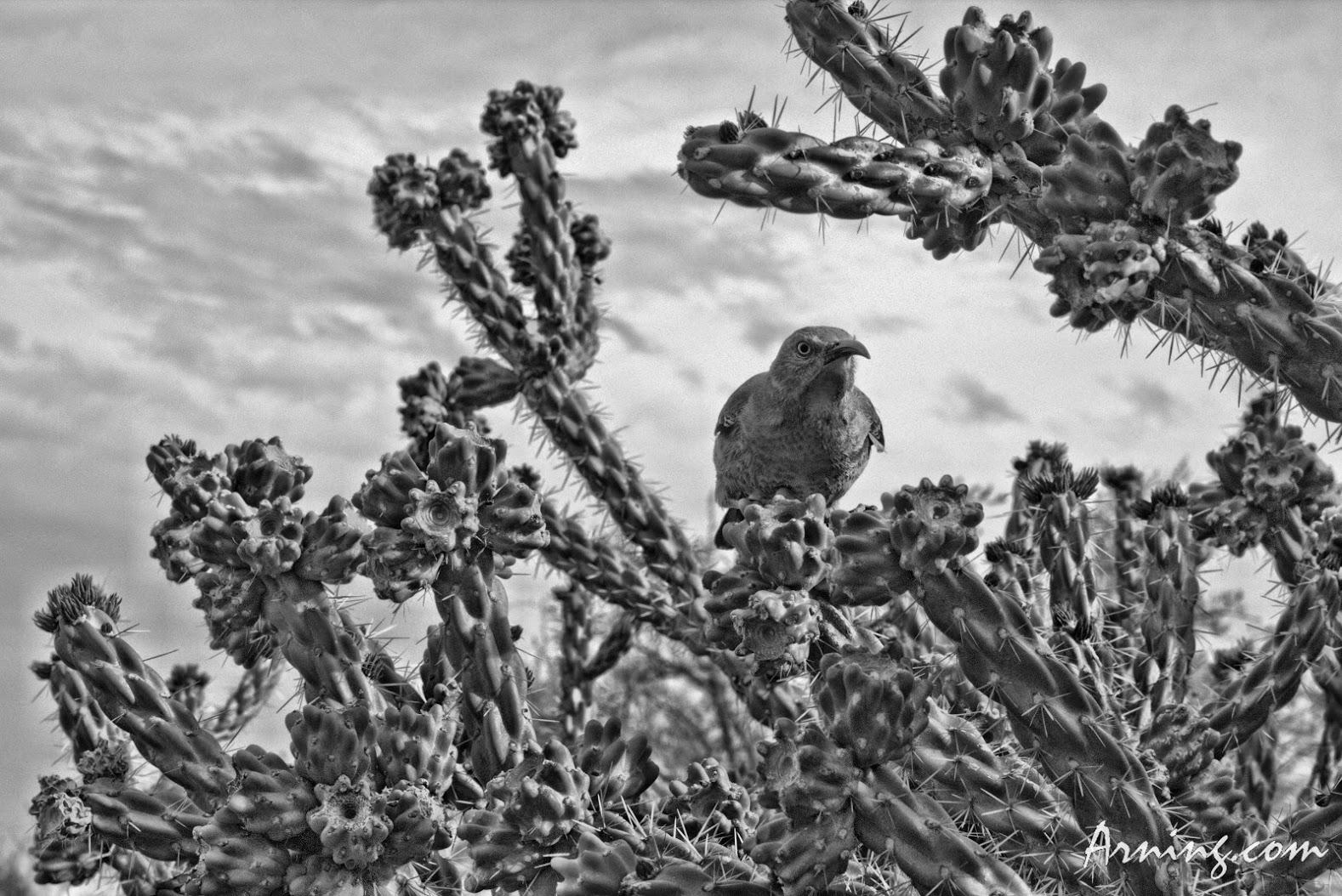Mother bird guarding her nest