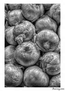 Onions in Black and White