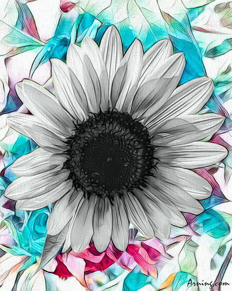 Sunflower minus yellow