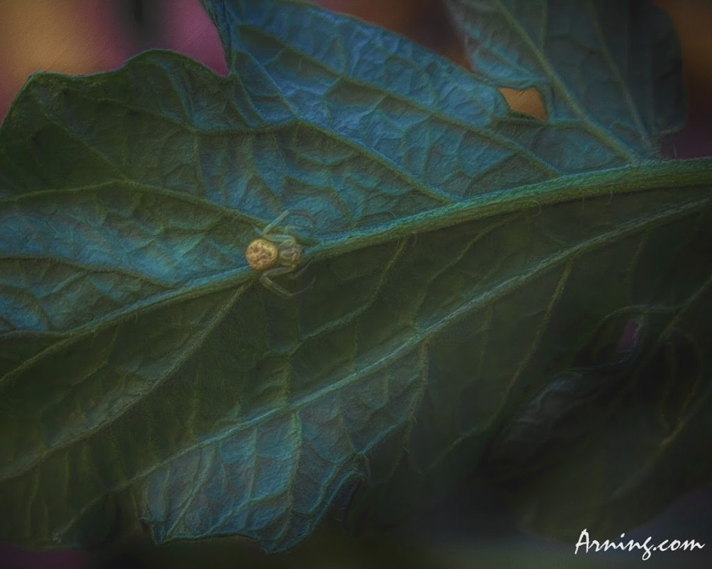 Tomato Plant Spider