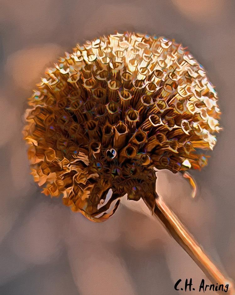 sphere florets