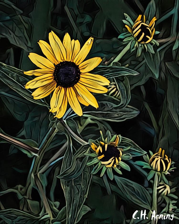 State Fair Sunflowers