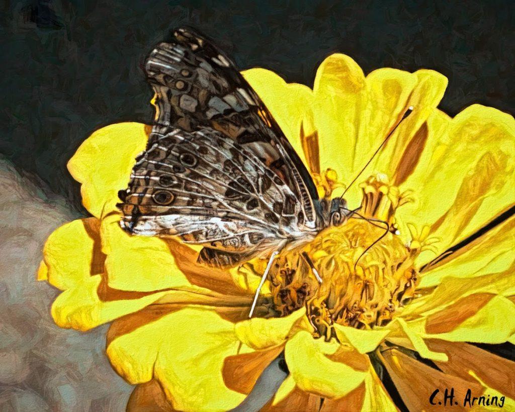 Nectar Trough