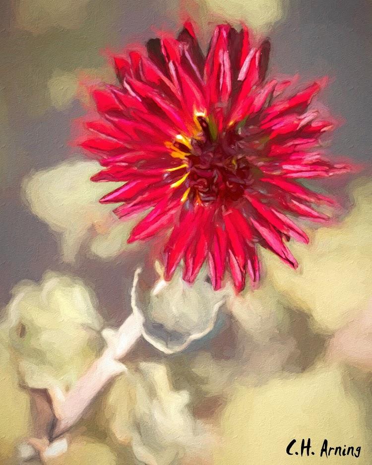 Last Flower