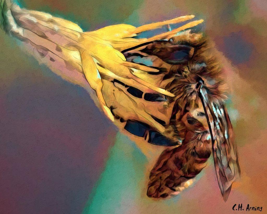 honey-gathering