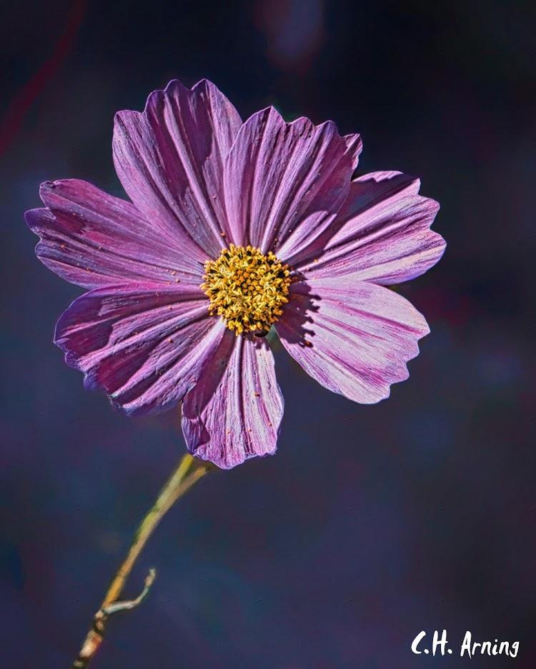 Flower Along Louisiana