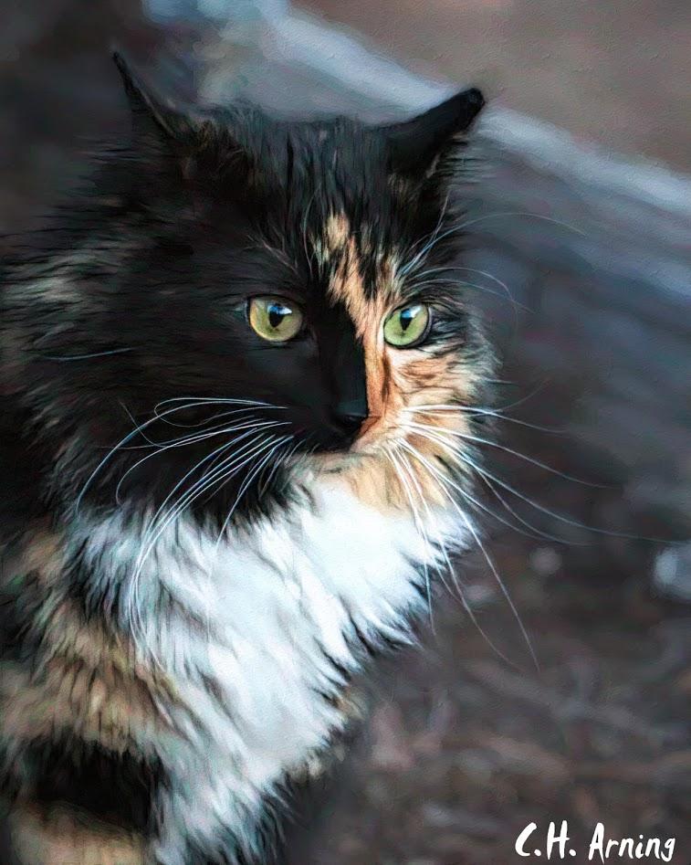 Kelly's Cat