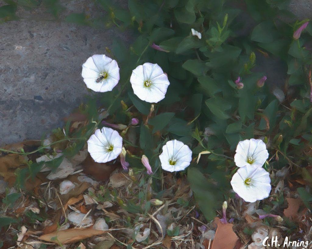 curb flowers