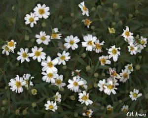 Nature's bouquet