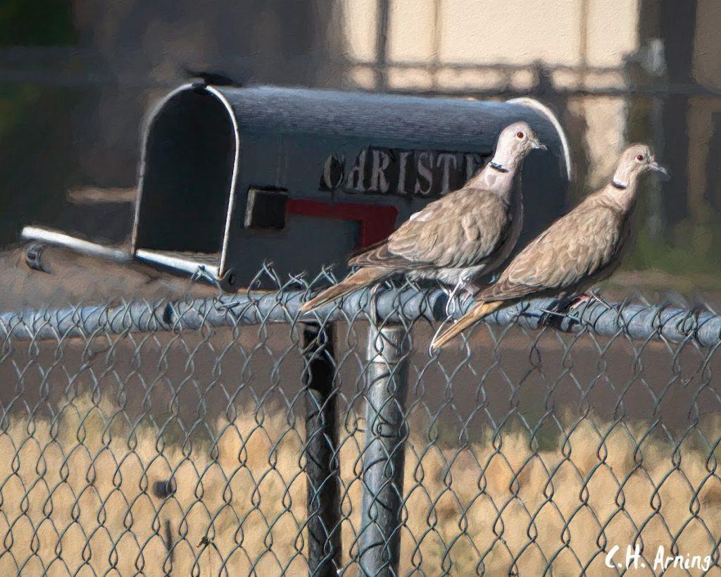 Dos Doves