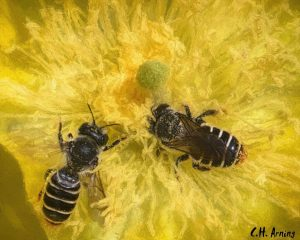 Bee Blessedness