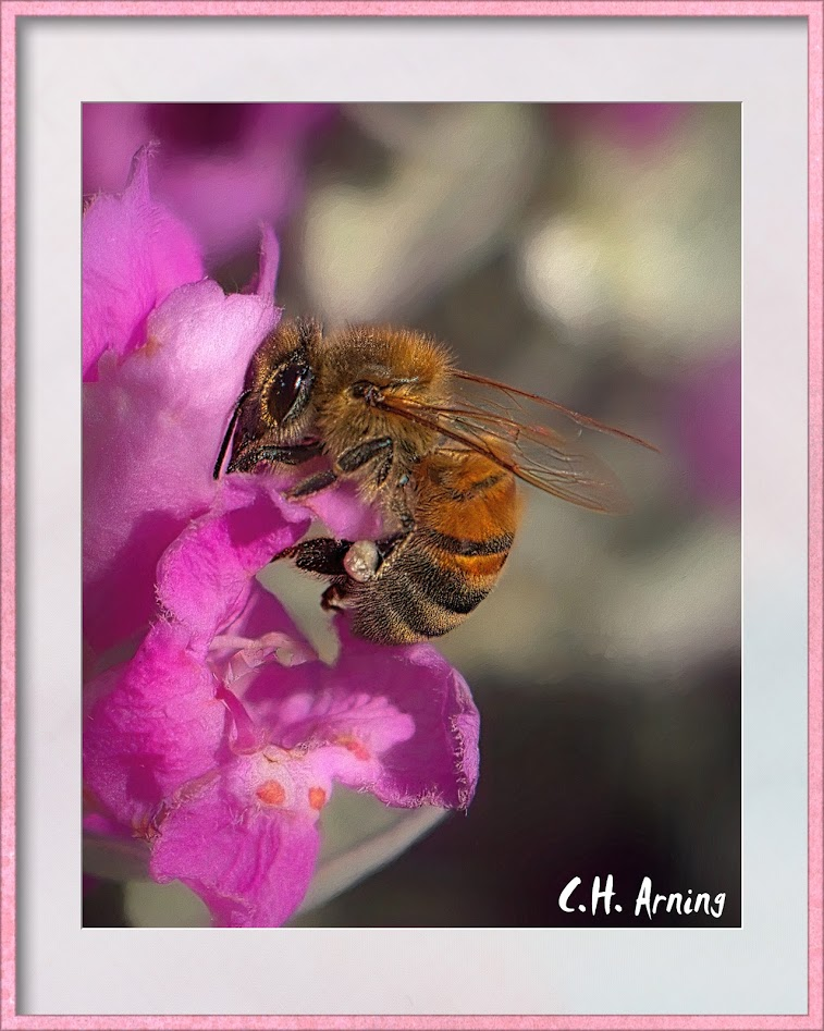 Another Bee