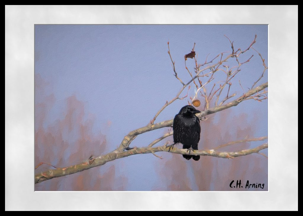 Park Crow