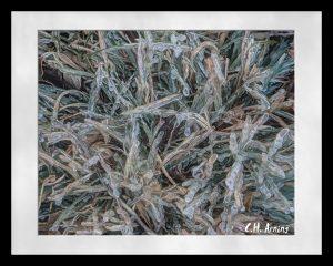 Frozen Yard