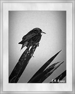 bird in black