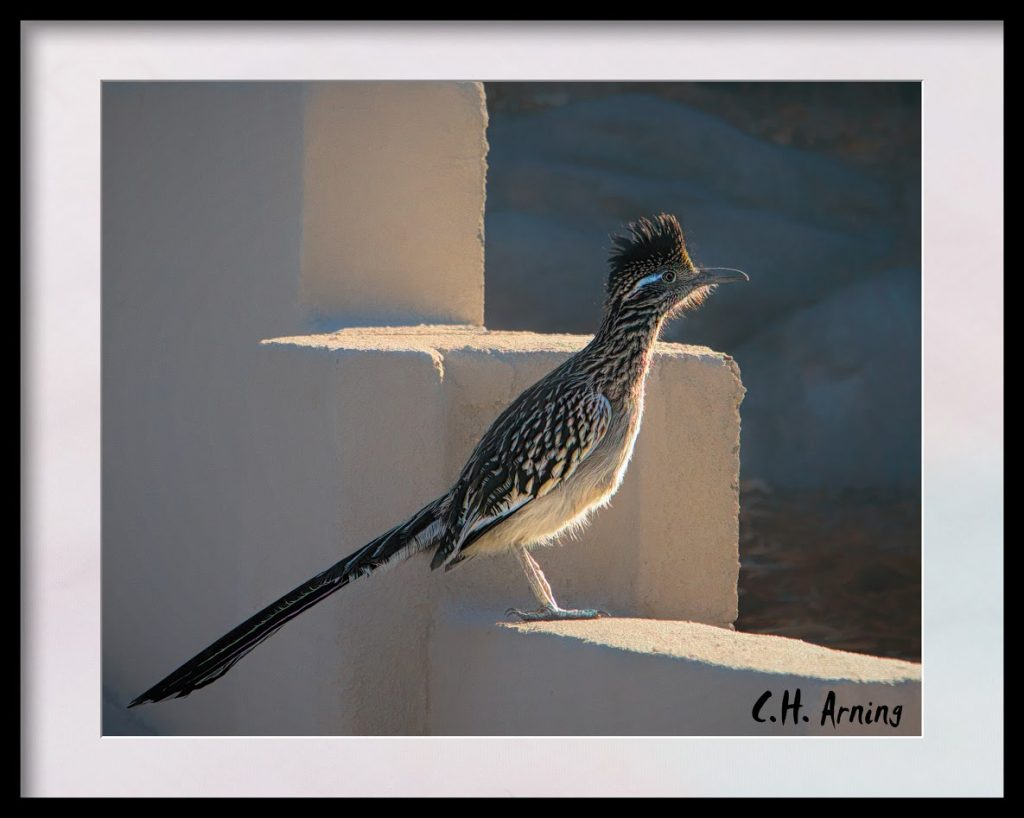 Another Roadrunner