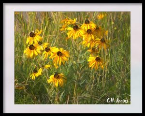yard of sunflowers
