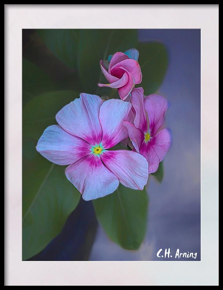 Wife's Flowers
